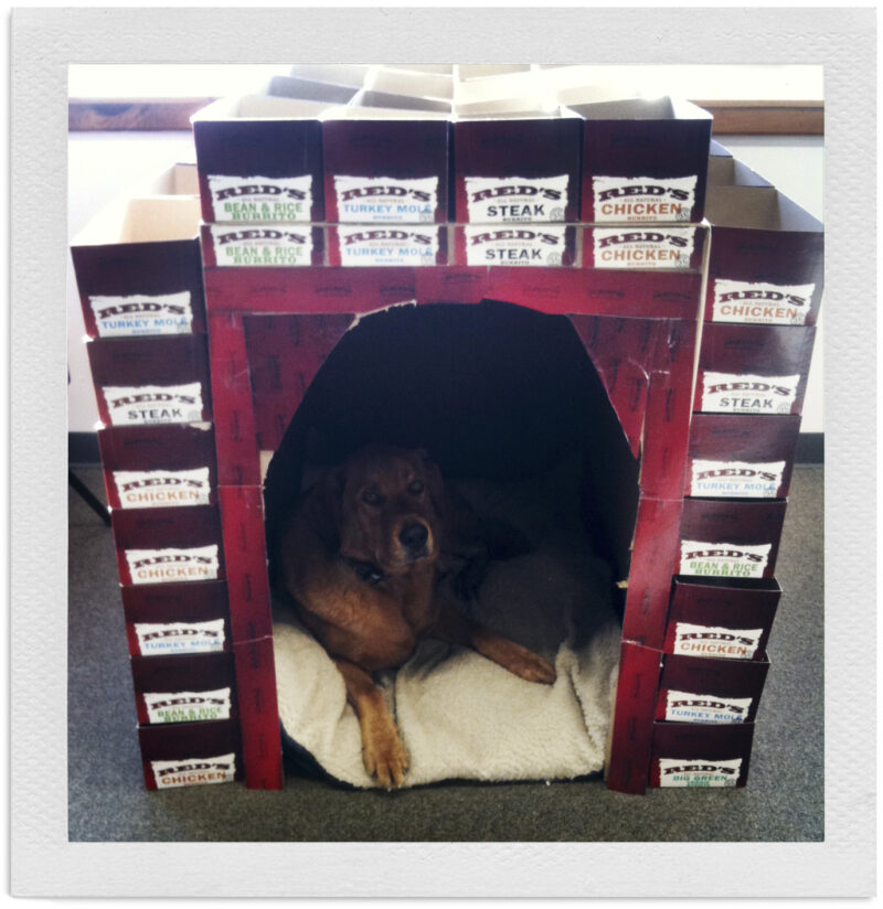 Dog in Red's Doghouse